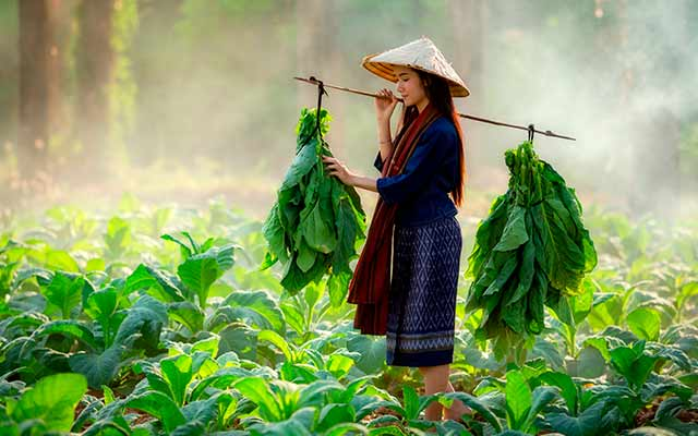 Essential of Northern Laos