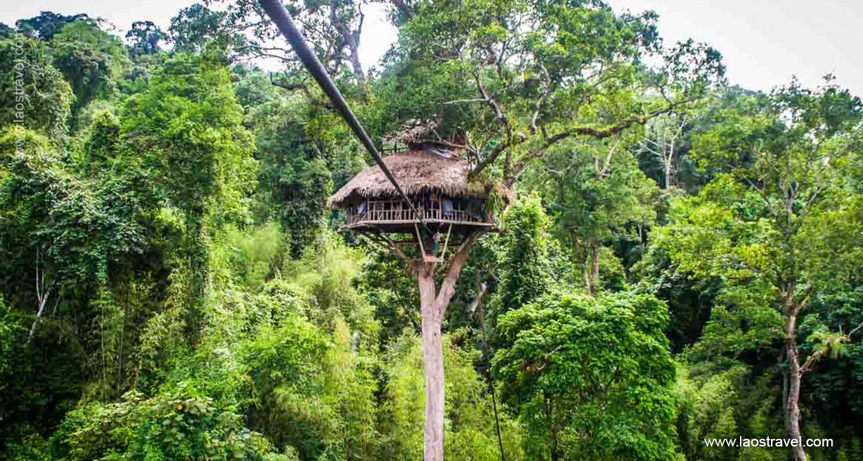 Laos-Tree-house-3