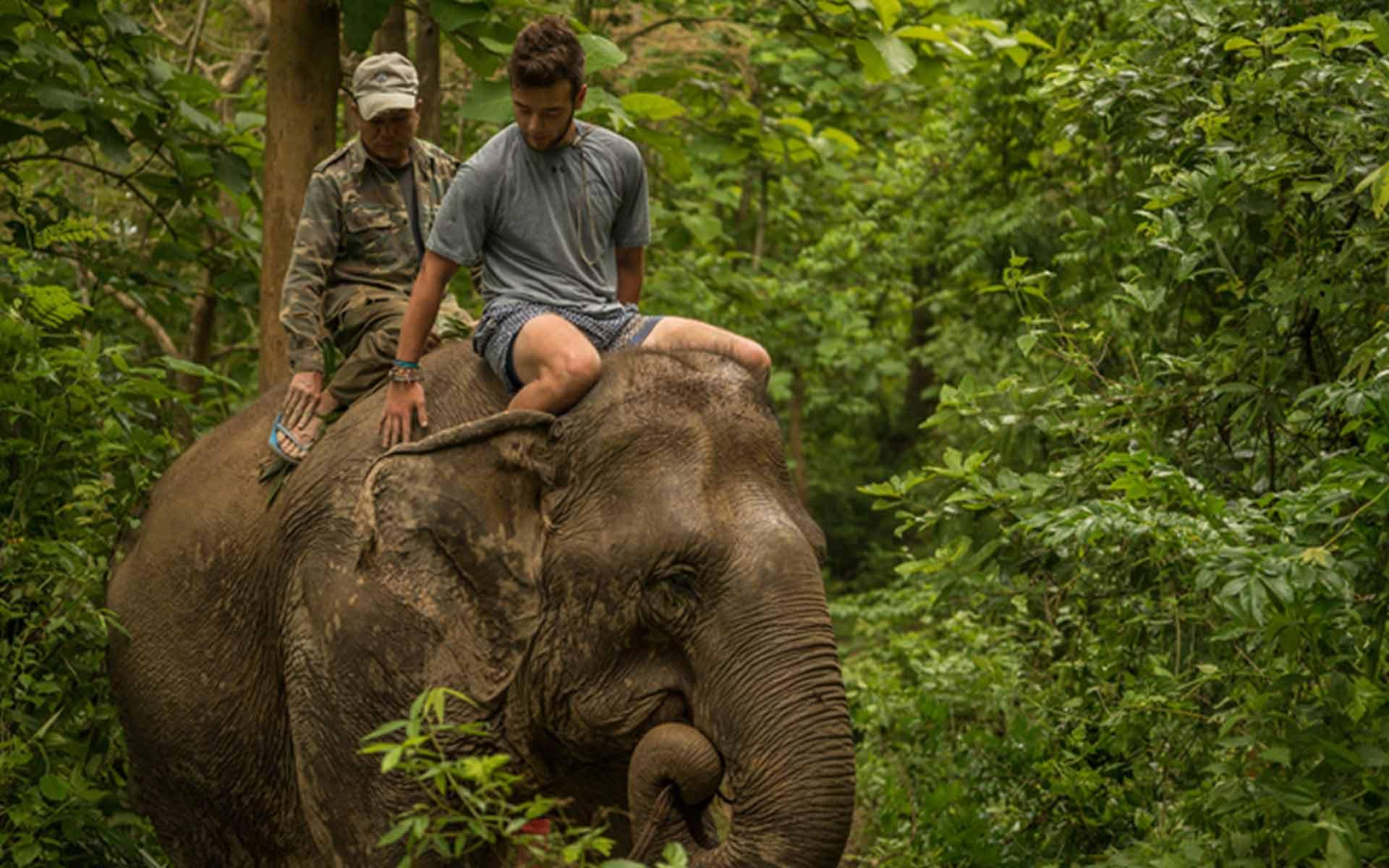 image elephants of laos