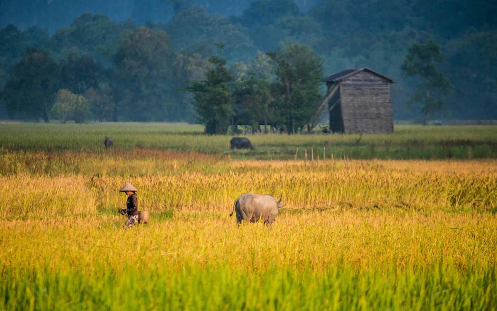 rice fields Konglor Village