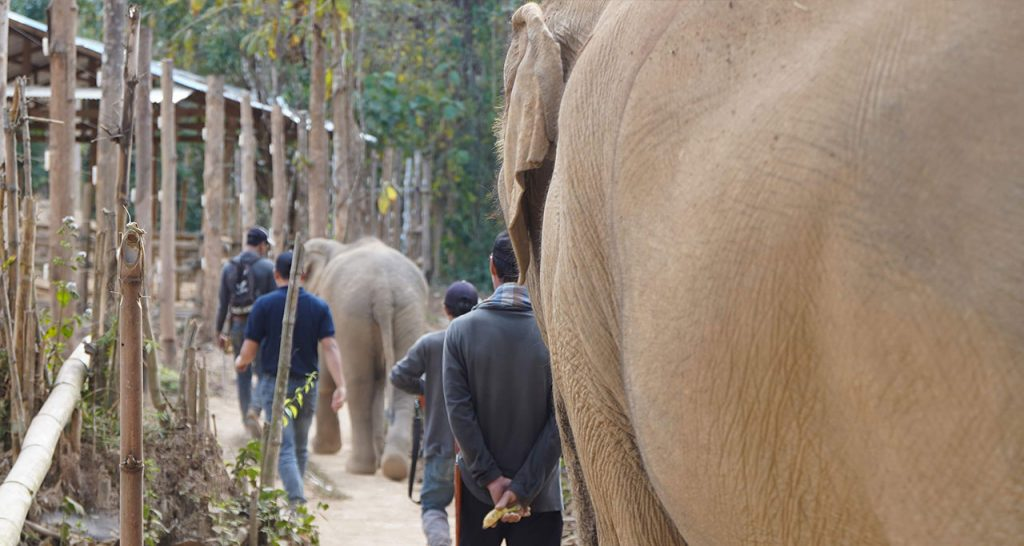 Interact with elephant in luang prabang Laos Travel
