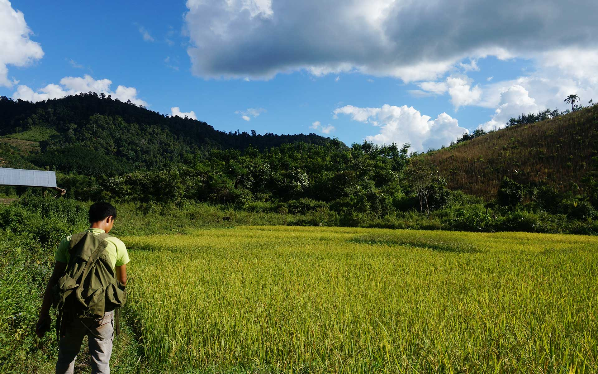 trekking rice field in luang namtha laos