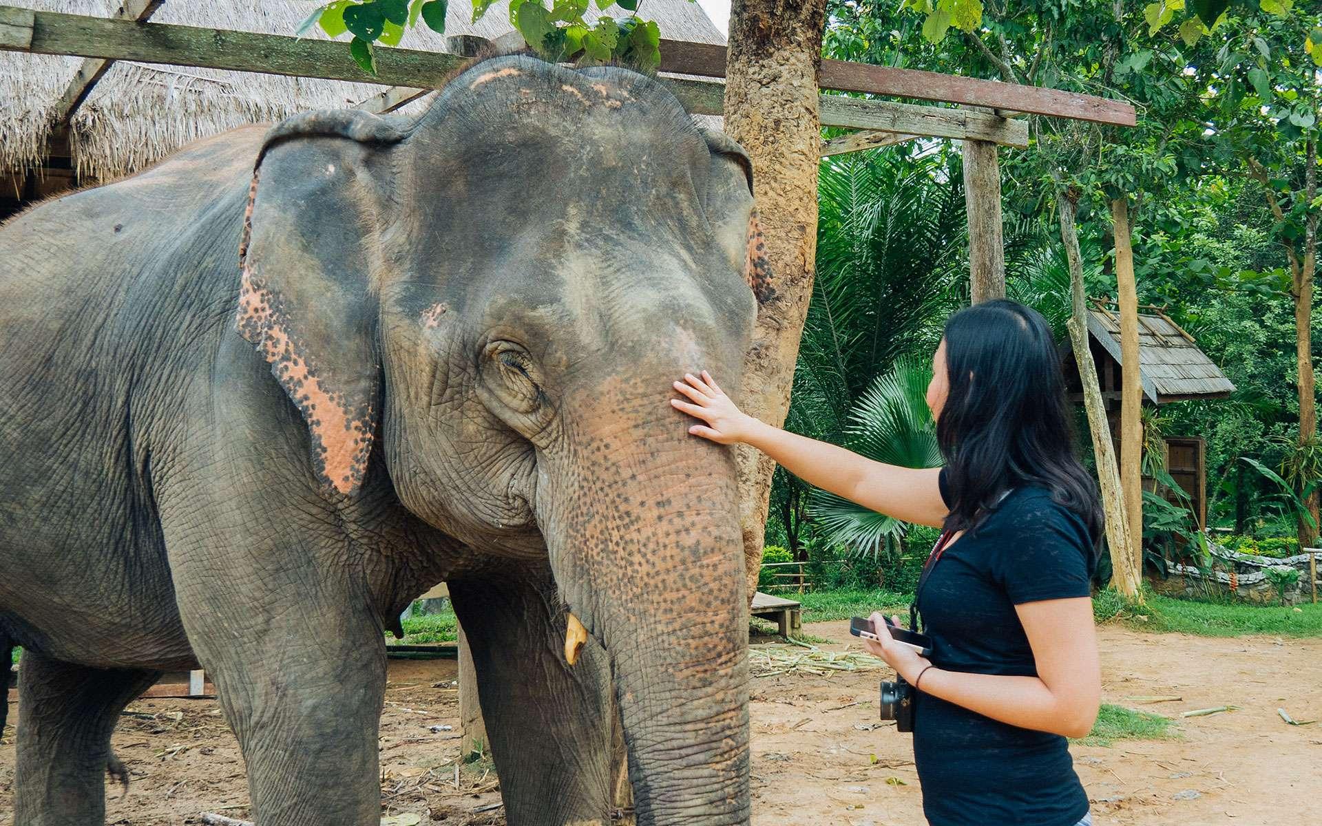 Elephants in Laos