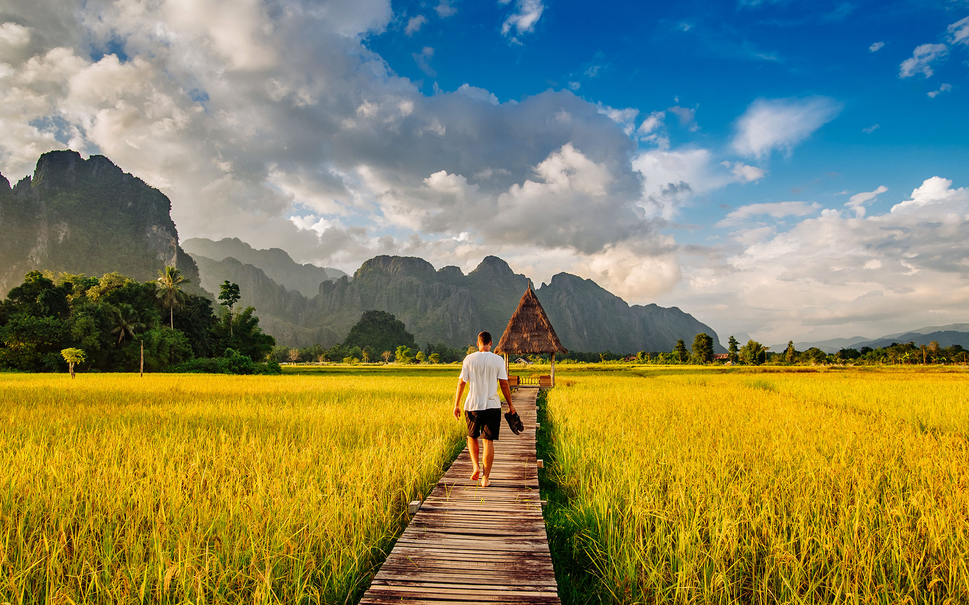 paddy fields in Vang Vieng